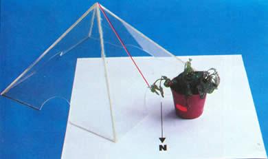 experiencia plantas piramide
